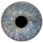 Iris des Auges